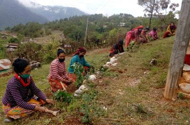 Plantation by women group members of Palpa district